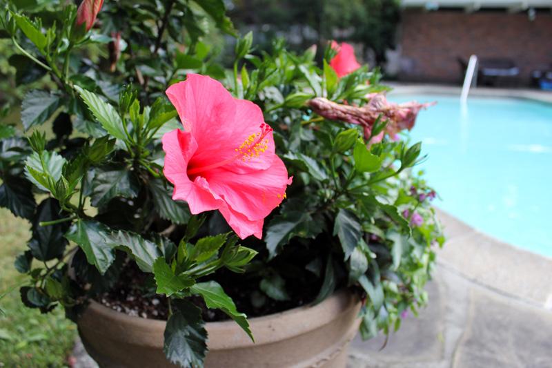 pool-pot-timeless-gardens-ny