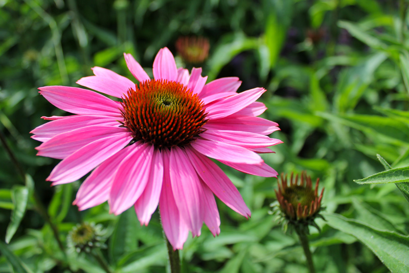 super-pink-flower-timeless-gardens-ny
