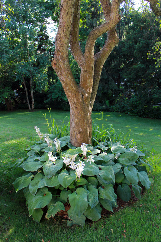 tree-bed-timeless-gardens-ny