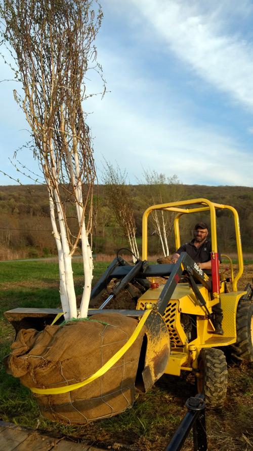 tree-planting-timeless-gardens-ny
