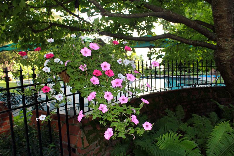 pool-hanging-basket-timeless-gardens-ny