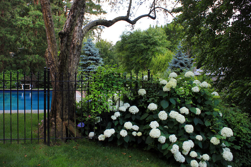 bushes-hide-fences-timeless-gardens-ny