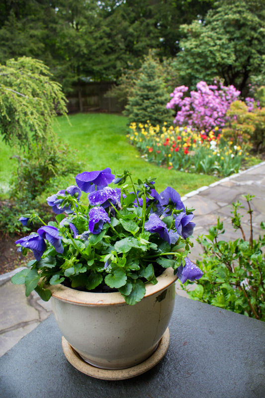 color-gardens-timeless-gardens-ny