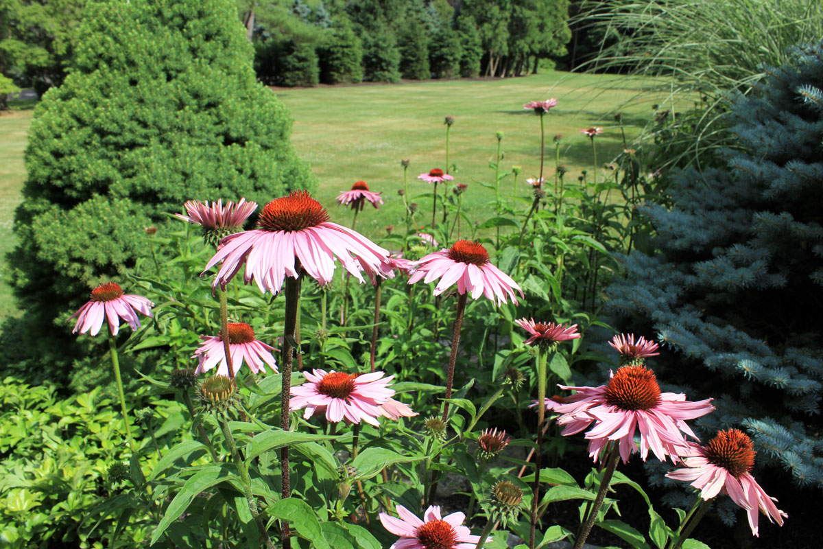 landscape-depth-timeless-gardens-ny