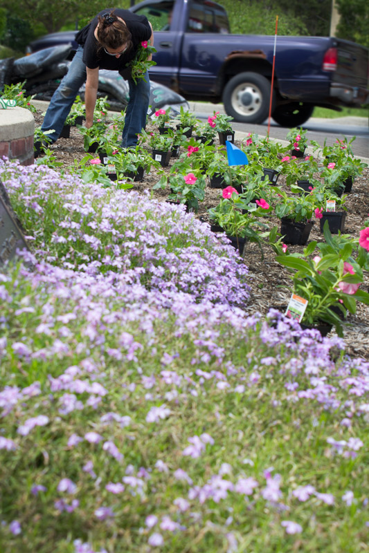 linda-plants-timeless-gardens-ny