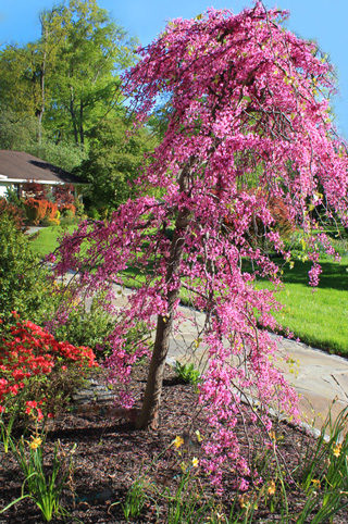 pink-view-timeless-gardens-ny