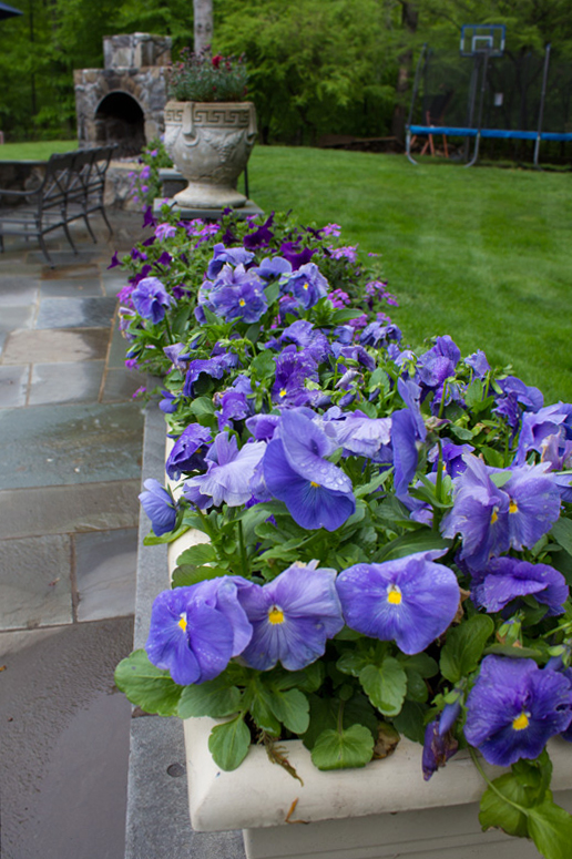 pots-for-color-timeless-gardens-ny