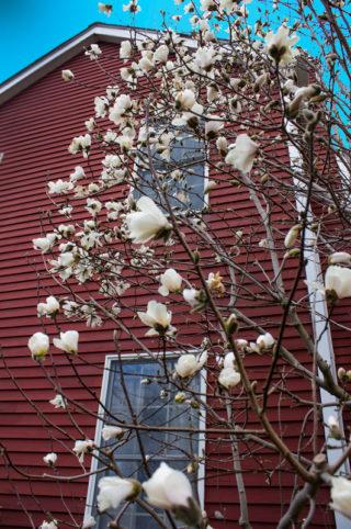 tree-bloom-timeless-gardens-ny