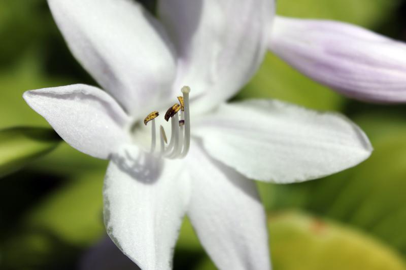 white-flower-ecu-timeless-gardens-ny