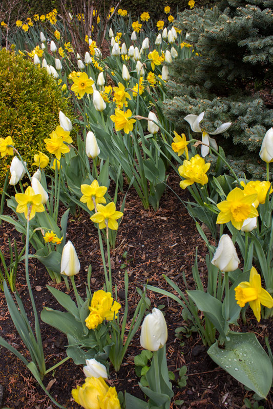 yellow-white-bed-timeless-gardens-ny