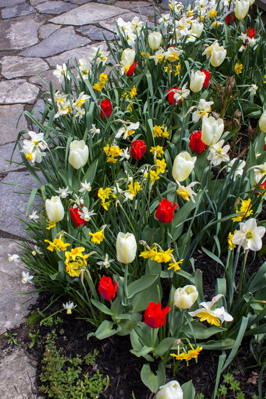 reds-yellows-whites-timeless-gardens-ny